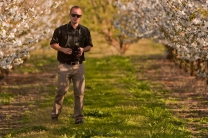 Here's me wearing my professional face in a cherry orchard.